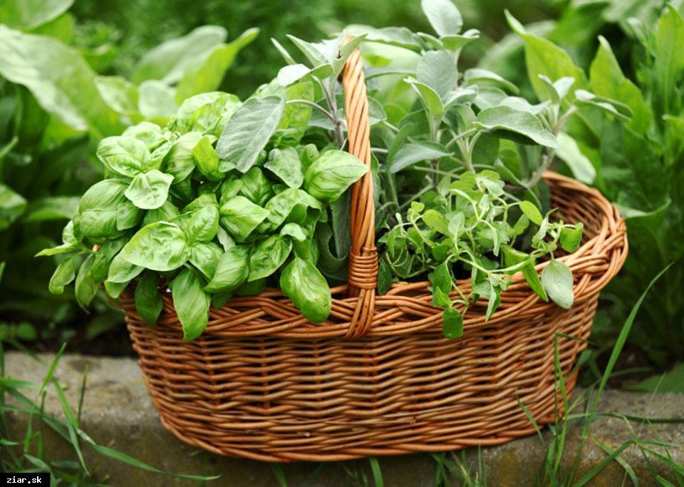 obr: Bylinková záhradka pri MsKC s dotáciou 1 300 eur
