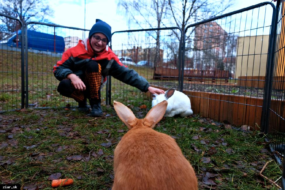 obr: Na Dvojke obohatili školskú záhradu o chov králikov