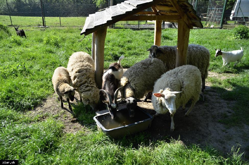 obr: V Minizoo má svoj domov desať druhov zvierat