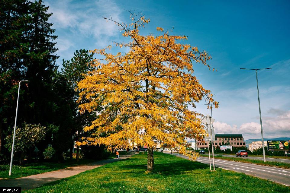 obr: Prišla skutočná jeseň