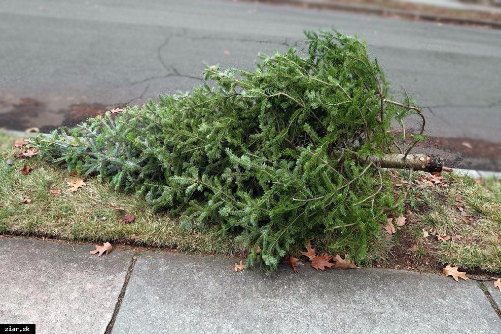 obr: Aj tohto roku budeme zbierať živé vianočné stromčeky. Tu sú termíny