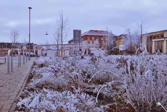 pocasie_februar_zima_polavuje_zamrznute_rano.jpg
