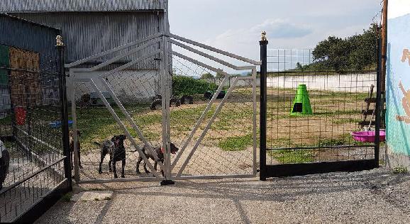 Útulok pre psov prechádza pod správu mesta