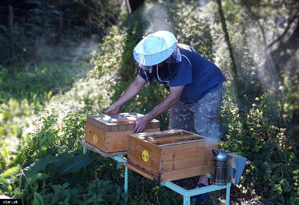obr: V sade máme prvý úľ. Včely sa už pripravujú na zimu