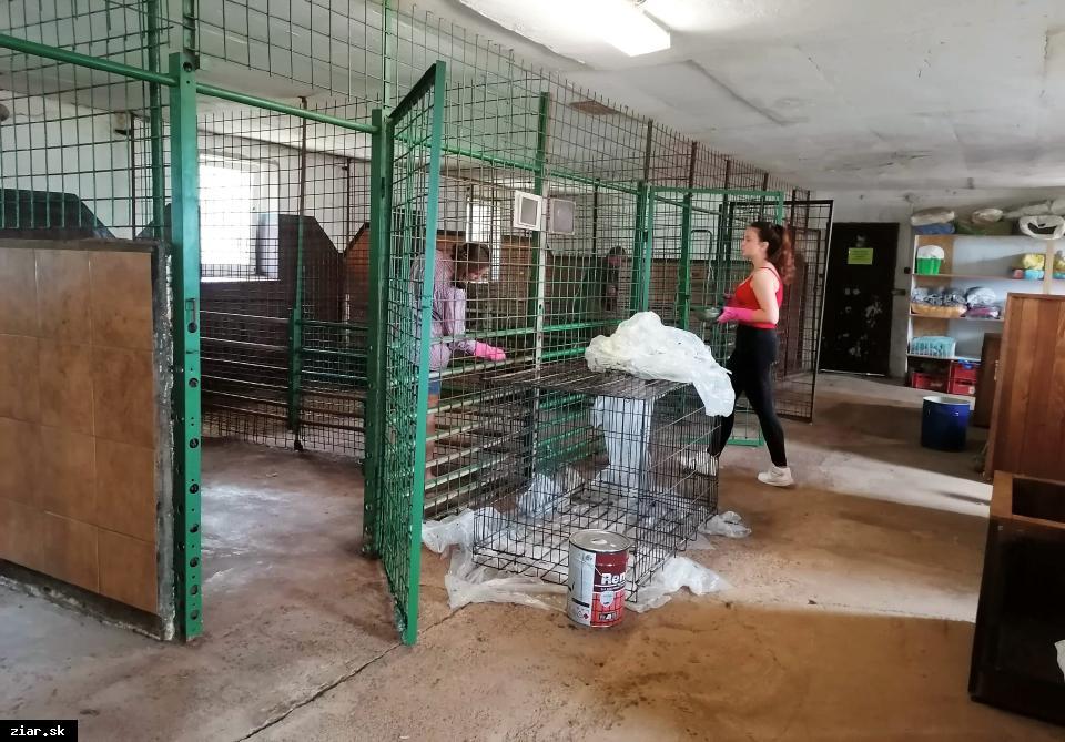 obr: V útulku máme 32 psíkov, ktorí hľadajú domov či aspoň dočasku