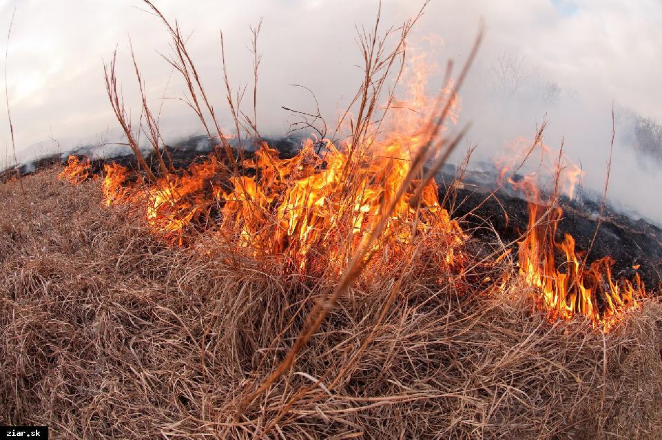 Pozor na vypaľovanie suchých tráv