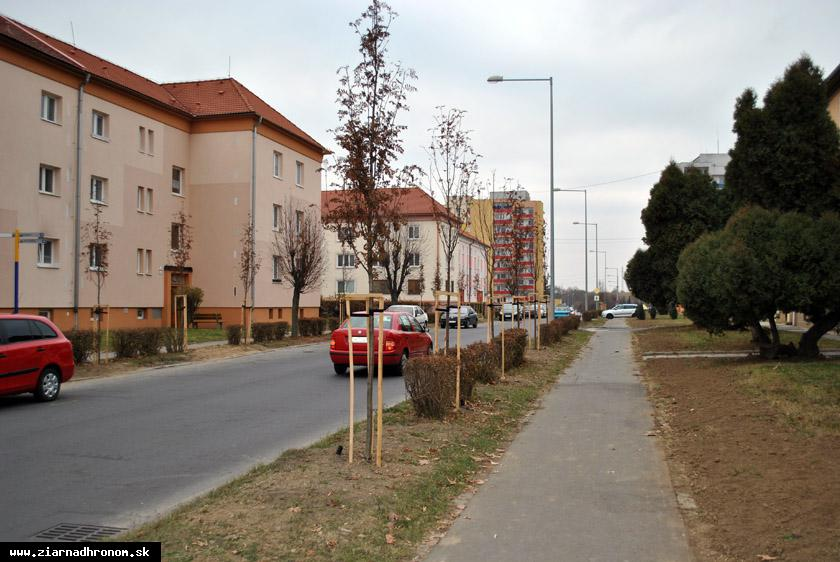 obr: Do výsadby zelene investuje mesto takmer 18-tisíc eur