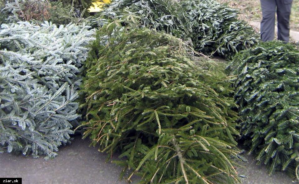obr: Bezplatný odvoz živých vianočných stromčekov