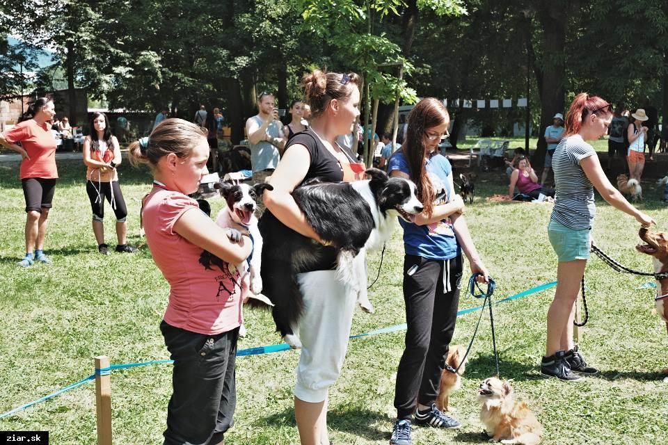 Žiarsky chlpáč – súťaž psíkov bez papierov o pôvode