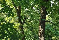 Ošetrovanie drevín v Parku Štefana Moysesa